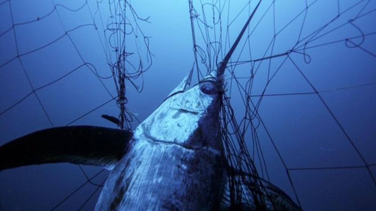 Enormes redes de deriva ilegales continúan devastando los mares en todo el mundo