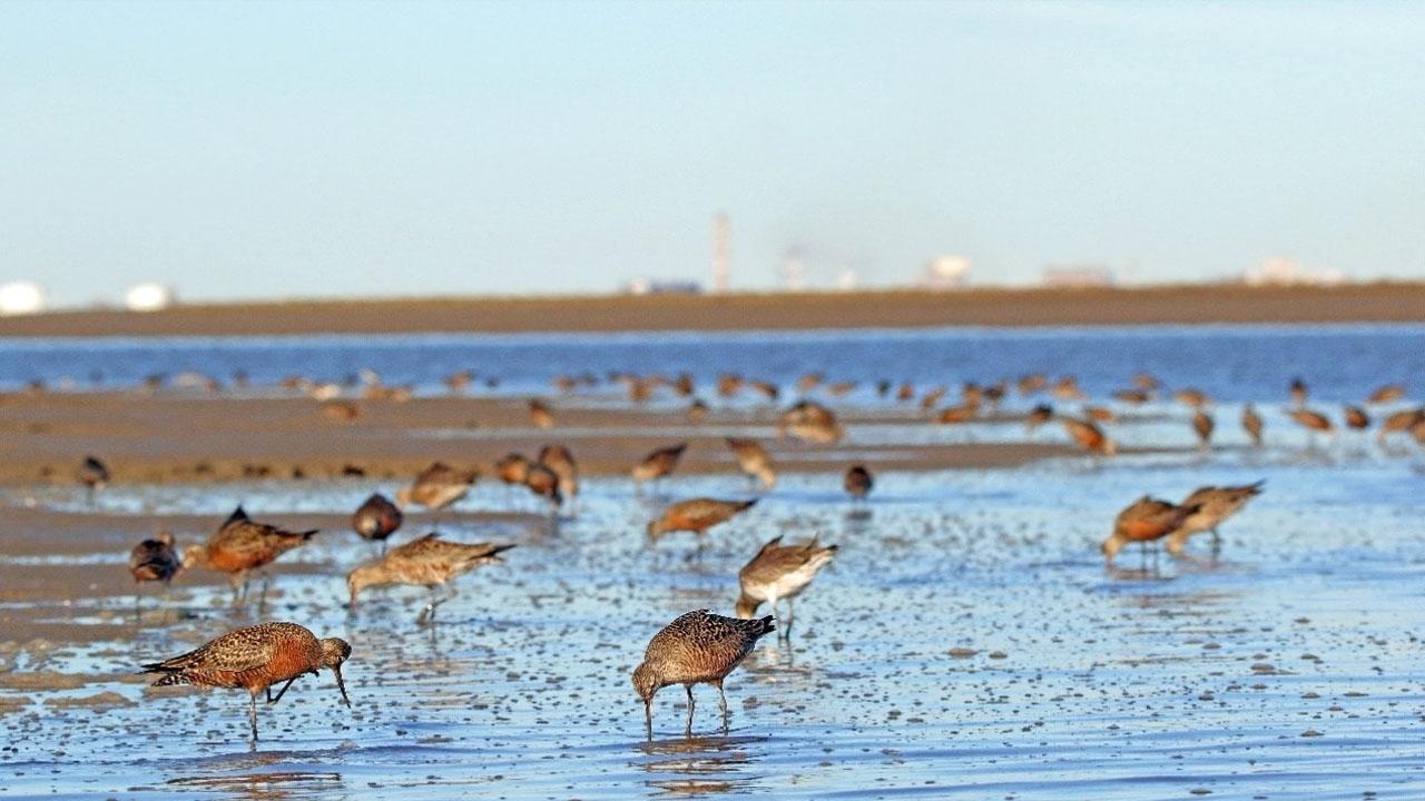 Bahía Blanca: ya funciona una obra clave para disminuir la contaminación del estuario