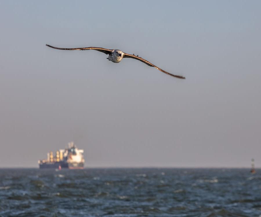 Canal Magdalena: ¿la hora de los puertos del sur?