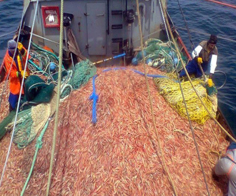 Impulsan la exportación de langostinos a Brasil desde la Provincia de Buenos Aires