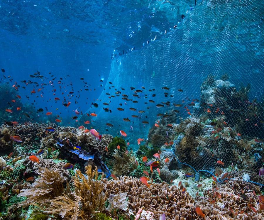 El océano: vida y medio de subsistencia